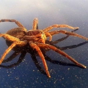 ALCAÑIZ pixabay arachnids-87236_640