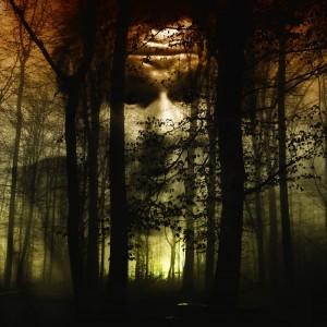 ALCAÑIZ pixabay forest-66291