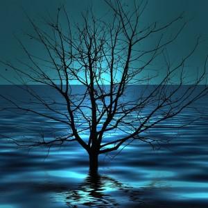 ALCAÑIZ pixabay tree-76748_1280